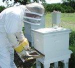 Пчеловод-универсальный специалист