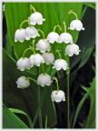 андыши цветут