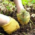 Восстановим лес вместе!