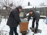 Заносим пчёл