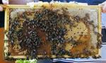Спасти пчёл