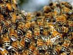 Урок пчеловода