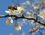 Чтение поэзии о пчёлах – защита от пошлости